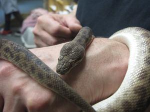 Snake Day 2014